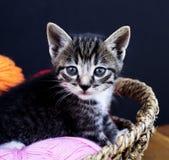 一只镶边小猫使用与羊毛球  柳条筐、木地板和黑背景 图库摄影