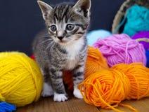 一只镶边小猫使用与羊毛球  柳条筐、木地板和黑背景 库存照片