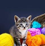 一只镶边小猫使用与羊毛球  柳条筐、木地板和黑背景 免版税库存图片