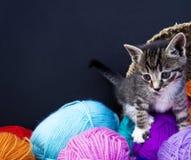 一只镶边小猫使用与羊毛球  柳条筐、木地板和黑背景 库存图片