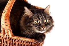 一只镶边蓬松猫的纵向在篮子的 库存图片