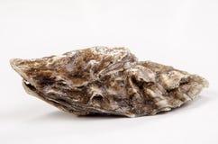 一只闭合的牡蛎 免版税库存图片