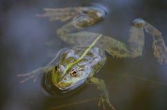 一只青蛙和昆虫的特写镜头画象在沼泽 库存照片