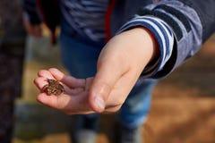 一只青蛙在儿童` s手上 免版税库存照片