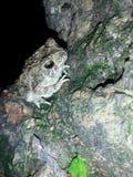 一只青蛙 库存照片