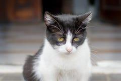 一只非常哀伤的猫的画象坐街道 免版税库存照片