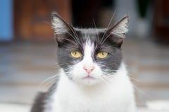一只非常哀伤的猫的画象坐街道 库存图片