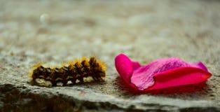 一只非常幼小蝴蝶 库存图片