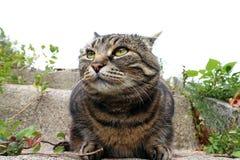 一只面目凶恶的猫的神色 图库摄影