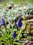 一只飞行土蜂在有花的一个庭院里 免版税库存照片
