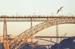 一只飞行海鸥在城市 免版税库存照片