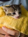 一只马恩岛的小猫的库存照片 库存照片