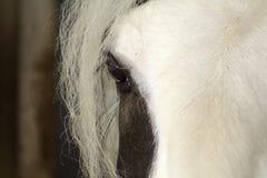 一只马` s眼睛的特写镜头与深刻的神色的,竞争aniaml 库存图片