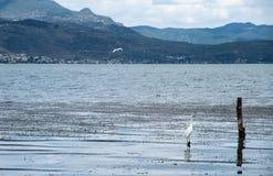 一只鸟在大理洱海 库存图片