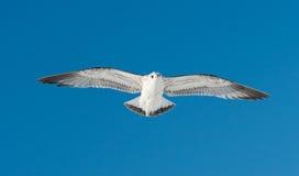一只鸟在天空飞行 库存照片