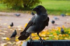 一只鸟在Kolomenskoe公园 库存图片