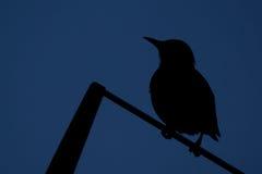 一只鸟的剪影在天空的 免版税库存图片
