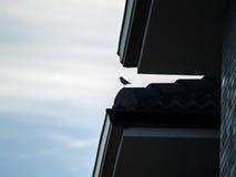 一只鸟的剪影在屋顶的 库存图片