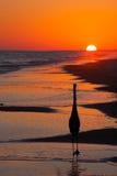 一只鸟的剪影在日落的 图库摄影