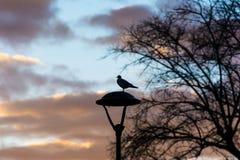 一只鸟的剪影在日落的 免版税库存照片