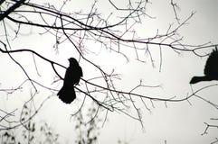 一只鸟的剪影照片在分支的,特写镜头 免版税库存图片