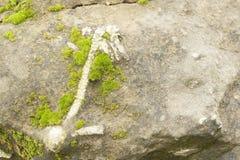 一只鸟的化石在石头的 免版税库存照片