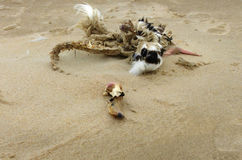 一只鸟的尸体在海滩的 库存图片