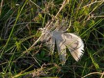 一只鸟的羽毛在地面上的 库存图片