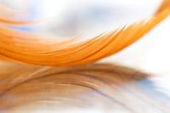 一只鸟的金羽毛在玻璃桌上的与反射 选择聚焦 免版税库存图片