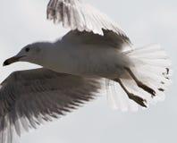 一只鸥的美好的图象在天空的 免版税库存照片