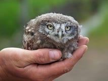 一只鸱的幼鸟 图库摄影
