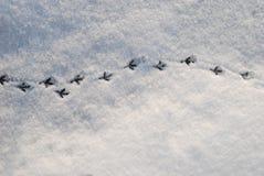 一只鸽子的踪影在雪的在阳光 冬天 库存照片