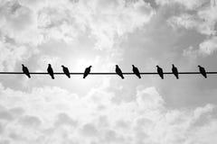 一只鸽子认为与其他不同 库存照片