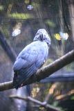 一只鹦鹉在动物园里 库存图片