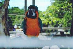 一只鹦鹉 库存照片