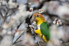 一只鹦鹉 免版税图库摄影