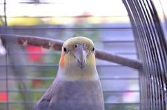 一只鹦鹉 免版税库存图片