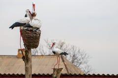 一只鹳的雕象在房子的屋顶的 库存照片