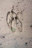 一只麋的踪影印刷品在湿沙子的 库存图片