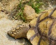 一只黄色乌龟的特写镜头 免版税图库摄影