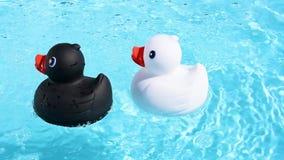 一只黑和一只白色橡胶鸭子 影视素材