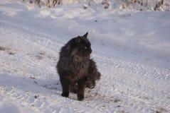 一只黑蓬松猫坐雪 库存图片