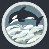 一只黑虎鲸的传染媒介例证 库存照片