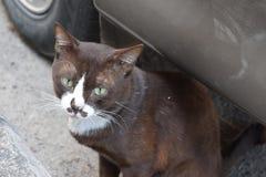 一只黑街道猫的特写镜头与嫉妒的在泰国 库存图片