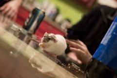 一只鼠 免版税库存图片