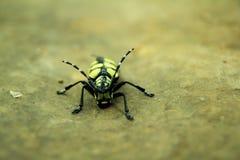 一只黑和黄色甲虫的特写镜头 库存照片