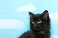 一只黑多灰尘的肮脏的小猫的画象 库存照片