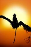 一只猴子的剪影在日落的 免版税图库摄影