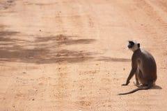 一只猴子 免版税图库摄影