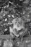 一只猴子 库存图片